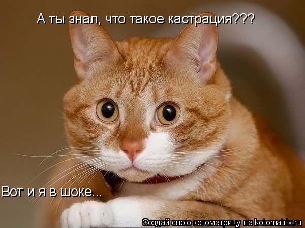 Котоматрица: Вот и я в шоке... А ты знал, что такое кастрация???