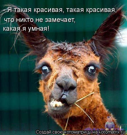 Котоматрица: - Я такая красивая, такая красивая, что никто не замечает, какая я умная!