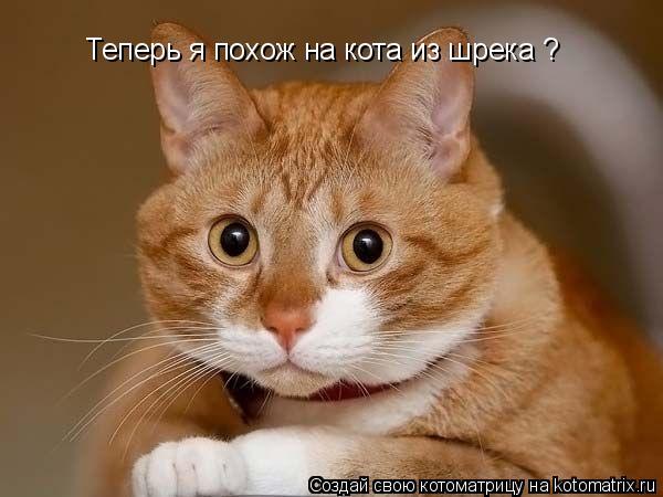 Котоматрица: Теперь я похож на кота из шрека ?