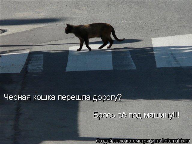 Котоматрица: Черная кошка перешла дорогу? Брось её под машину!!!