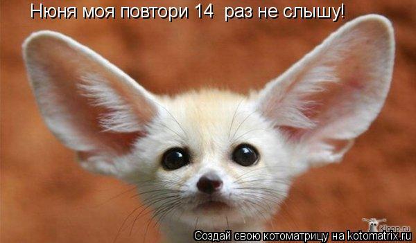 Котоматрица: Нюня моя повтори 14  раз не слышу!