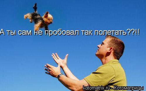 Котоматрица: А ты сам не пробовал так полетать??!!