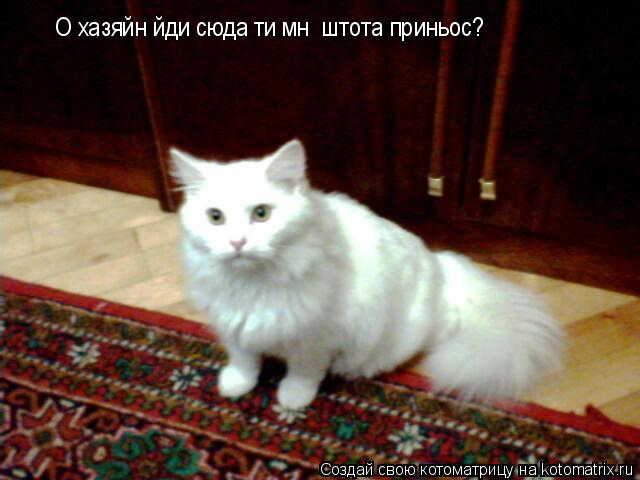 Котоматрица: O хазяйн йди сюда ти мнє штота приньос?