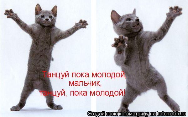 Котоматрица: Танцуй пока молодой, мальчик, танцуй, пока молодой!