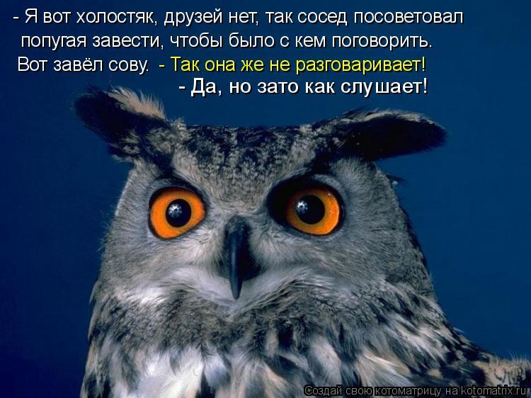 Котоматрица: - Я вот холостяк, друзей нет, так сосед посоветовал  попугая завести, чтобы было с кем поговорить. Вот завёл сову. - Так она же не разговаривае