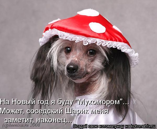 """Котоматрица: На Новый год я буду """"Мухомором""""... Может, соседский Шарик меня  заметит, наконец..."""