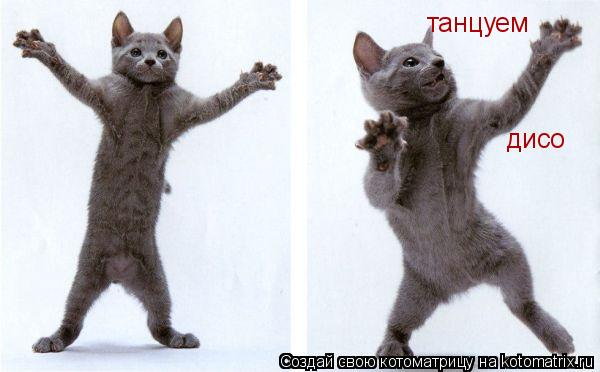Котоматрица: танцуем дисо
