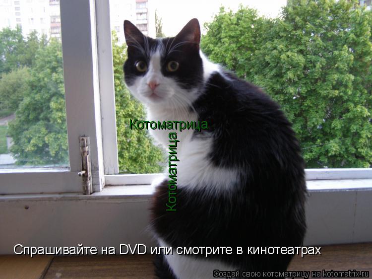 Котоматрица: Котоматрица Котоматрица Спрашивайте на DVD или смотрите в кинотеатрах
