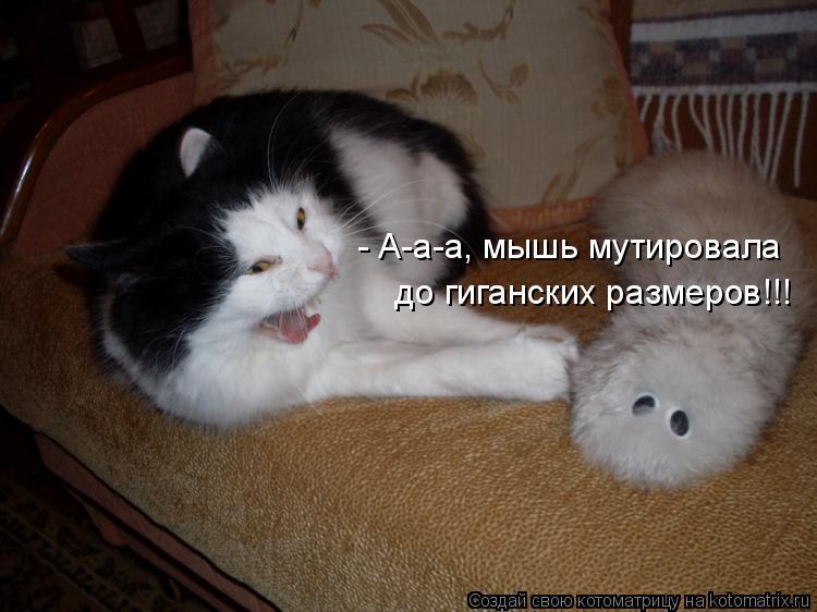 Котоматрица: - А-а-а, мышь мутировала  до гиганских размеров!!!