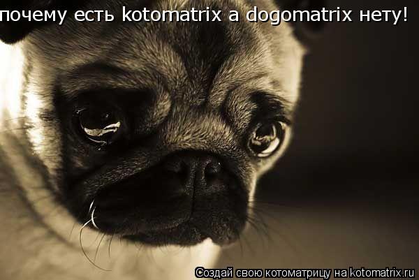 Котоматрица: почему есть kotomatrix а dogomatrix нету!