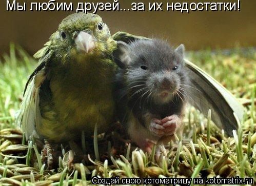 Котоматрица: Мы любим друзей...за их недостатки!