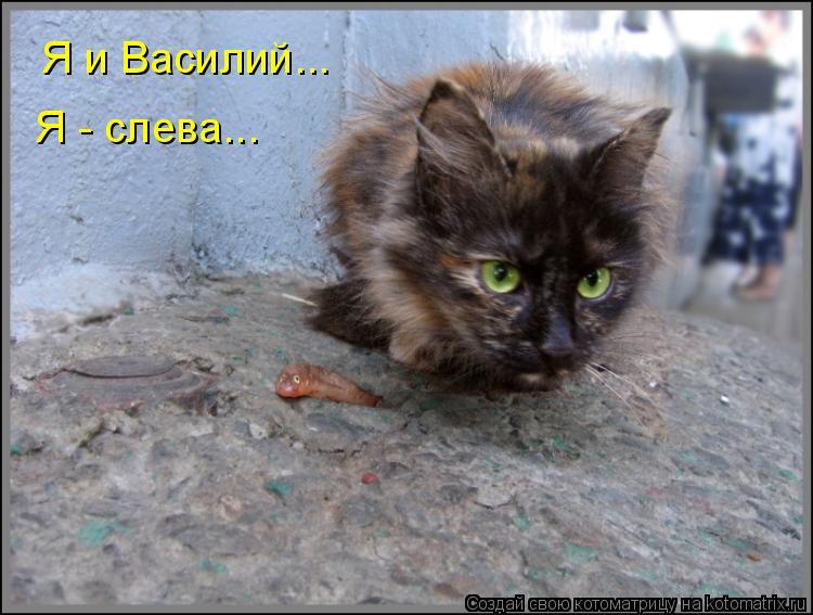 Котоматрица: Я и Василий... Я - слева...