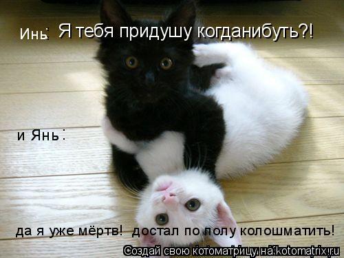 Котоматрица: Я тебя придушу когданибуть?! : : : да я уже мёртв!  достал по полу колошматить!