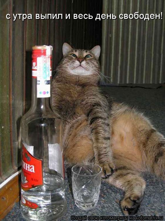 Котоматрица: с утра выпил и весь день свободен!