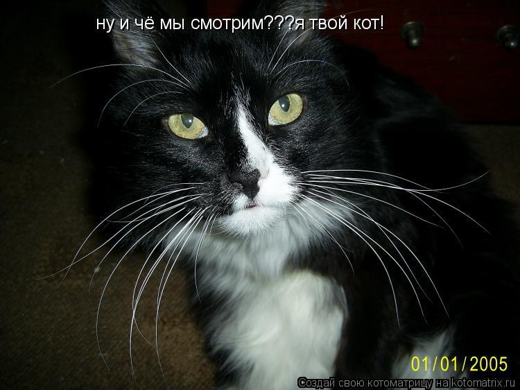 Котоматрица: ну и чё мы смотрим???я твой кот!