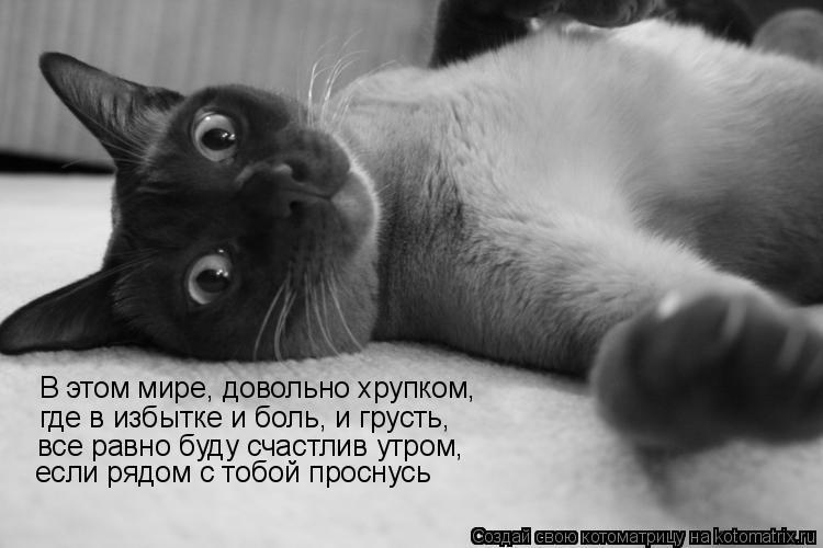 Котоматрица: В этом мире, довольно хрупком, где в избытке и боль, и грусть, все равно буду счастлив утром, если рядом с тобой проснусь