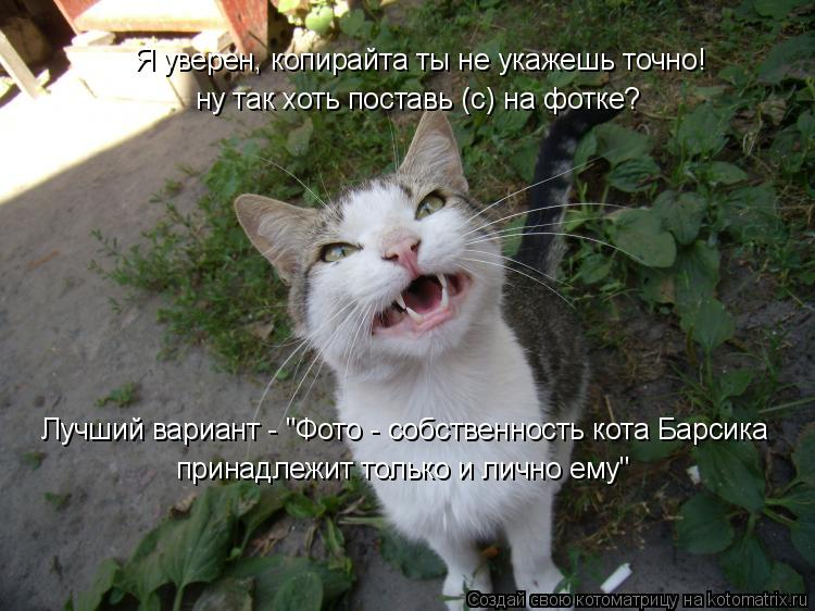 """Котоматрица: Я уверен, копирайта ты не укажешь точно! ну так хоть поставь (c) на фотке?  Лучший вариант - """"Фото - собственность кота Барсика  принадлежит тол"""
