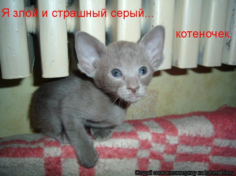 Котоматрица: Я злой и страшный серый... котеночек.