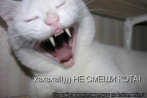 Котоматрица: хахаха!!))) НЕ СМЕШИ КОТА!