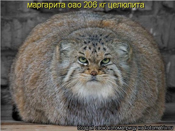 Котоматрица: маргарита оао 206 кг целюлита