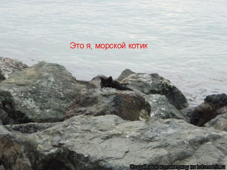 Котоматрица: Это я, морской котик