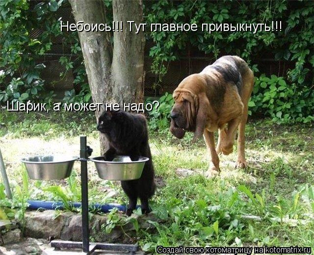 Котоматрица: Шарик, а может не надо? Небоись!!! Тут главное привыкнуть!!!