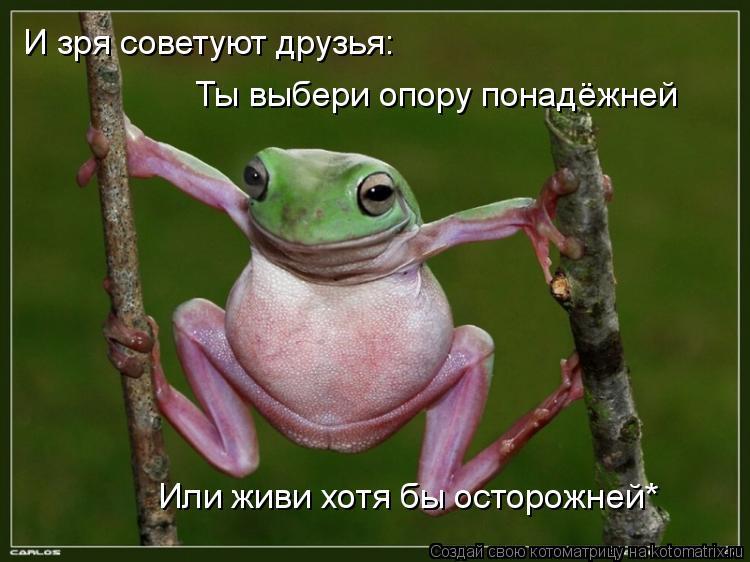 Котоматрица: И зря советуют друзья: Ты выбери опору понадёжней Или живи хотя бы осторожней*