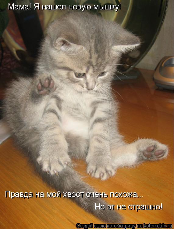 Котоматрица: Мама! Я нашел новую мышку! Правда на мой хвост очень похожа... Но эт не страшно!