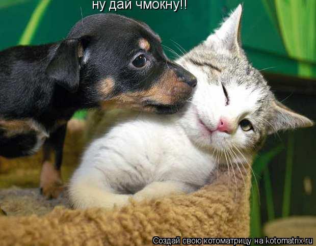 Котоматрица: ну дай чмокну!!