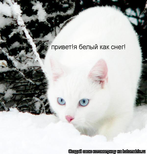 Котоматрица: привет!я белый как снег!