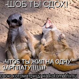 Котоматрица: -ШОБ ТЫ СДОХ! -ЧТОБ ТЫ ЖИЛ НА ОДНУ  ЗАРПЛАТУ!!!!!!!!