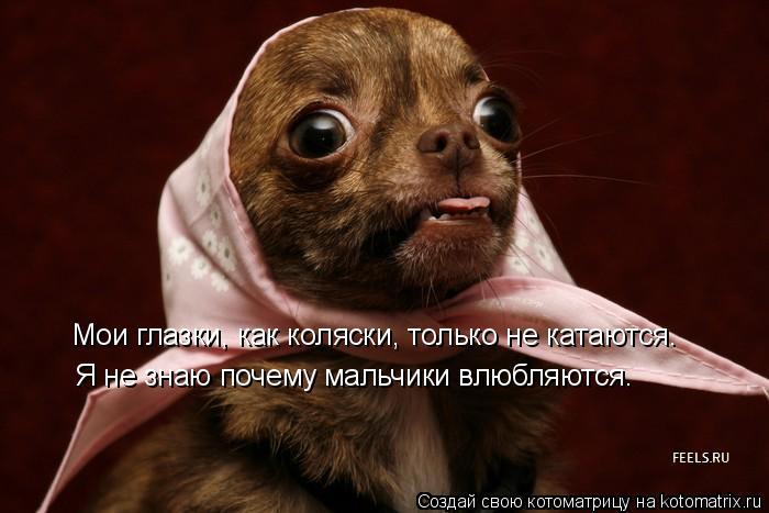 Котоматрица: Мои глазки, как коляски, только не катаются. Я не знаю почему мальчики влюбляются.