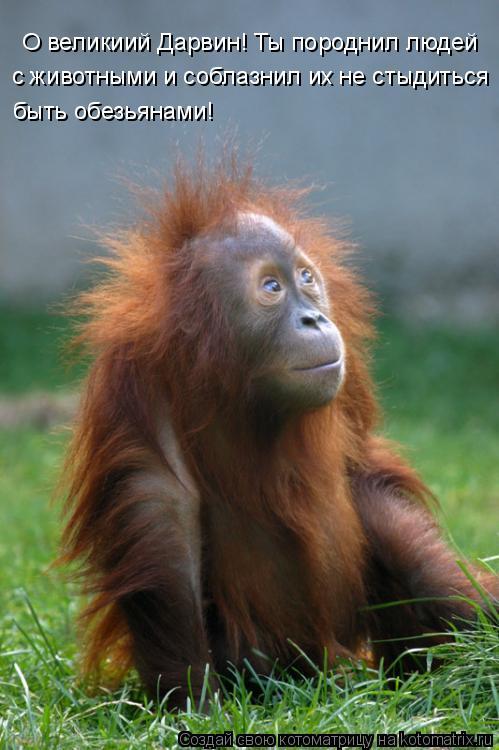 Котоматрица: О великиий Дарвин! Ты породнил людей  с животными и соблазнил их не стыдиться быть обезьянами!