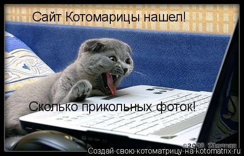 Котоматрица: Сайт Котомарицы нашел! Сколько прикольных фоток!