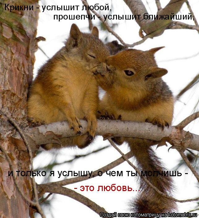 Котоматрица: Крикни - услышит любой, прошепчи - услышит ближайший, и только я услышу, о чем ты молчишь -  - это любовь...