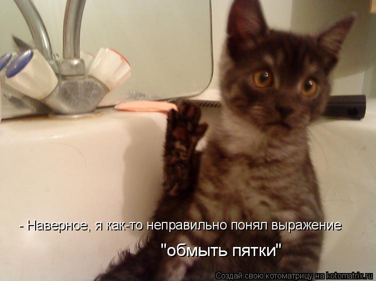 """Котоматрица: - Наверное, я как-то неправильно понял выражение """"обмыть пятки"""" """"обмыть пятки"""""""