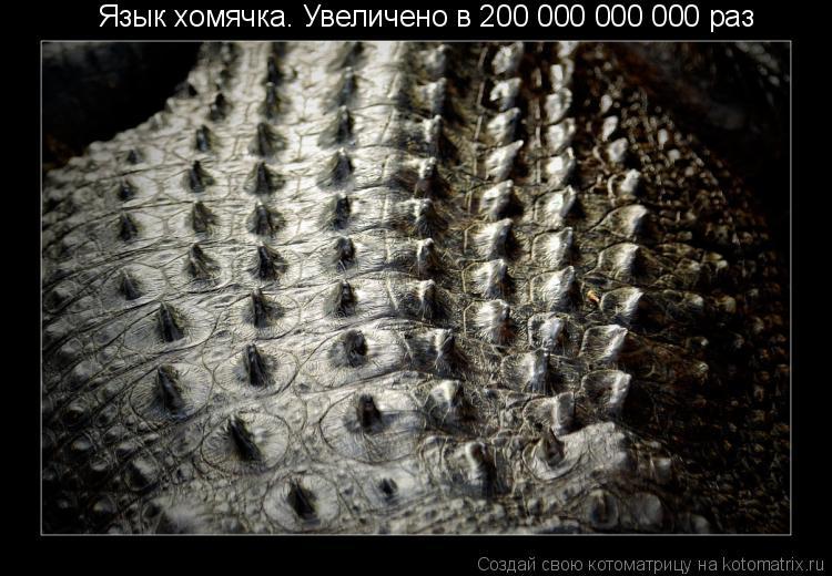 Котоматрица: Язык хомячка. Увеличено в 200 000 000 000 раз