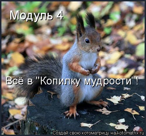 """Котоматрица: Модуль 4 Всё в """"Копилку мудрости""""!"""