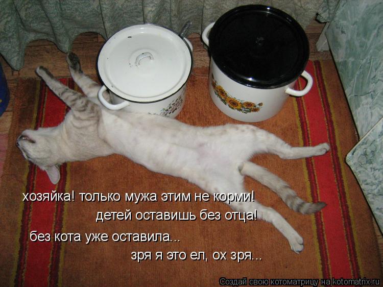 Котоматрица: хозяйка! только мужа этим не корми!  детей оставишь без отца!  без кота уже оставила...  зря я это ел, ох зря...