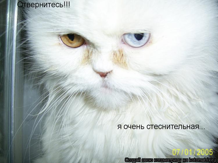 Котоматрица: Отвернитесь!!! я очень стеснительная...