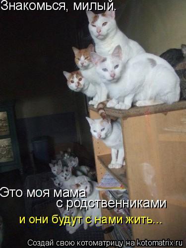 Котоматрица: Знакомься, милый. Это моя мама с родственниками и они будут с нами жить...