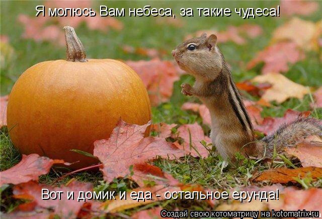 Котоматрица: Я молюсь Вам небеса, за такие чудеса! Вот и домик и еда - остальное ерунда!