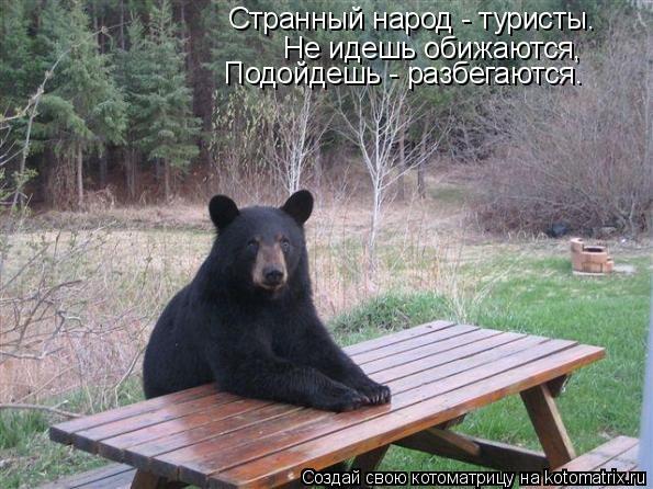 Котоматрица: Странный народ - туристы. Не идешь обижаются, Подойдешь - разбегаются.