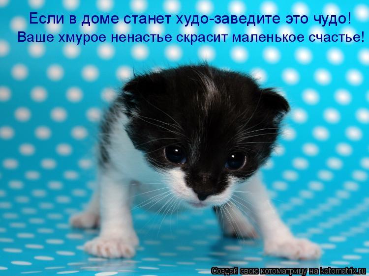 Котоматрица: Если в доме станет худо-заведите это чудо! Ваше хмурое ненастье скрасит маленькое счастье!