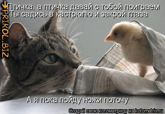 Котоматрица: Птичка, а птичка давай с тобой поиграем Ты садись в кастрюлю и закрой глаза А я пока пойду ножи поточу