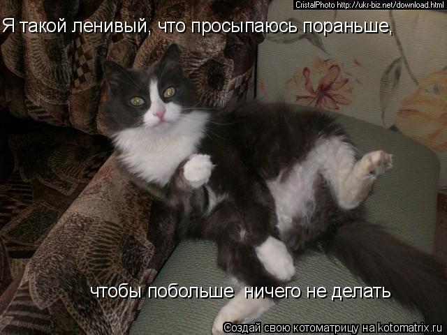 Котоматрица: Я такой ленивый, что просыпаюсь пораньше, чтобы побольше  ничего не делать