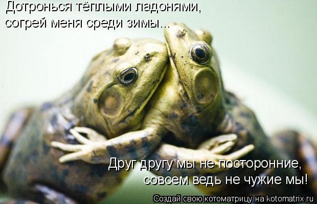 Котоматрица: Дотронься тёплыми ладонями, согрей меня среди зимы... Друг другу мы не посторонние, совсем ведь не чужие мы!