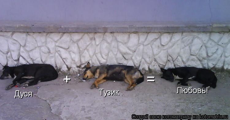 Котоматрица: Дуся + Тузик = Любовь!