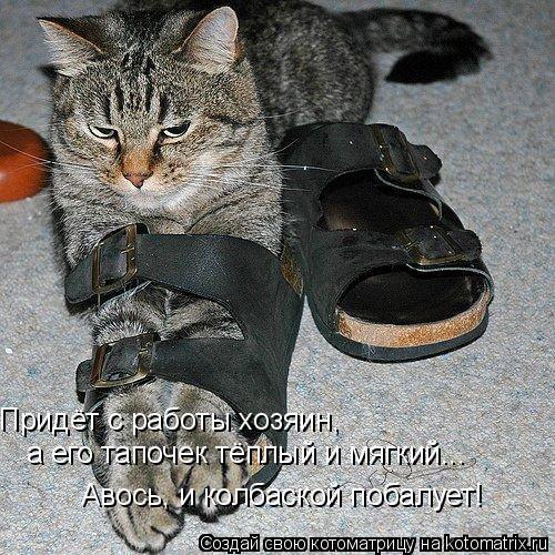 Котоматрица: Придёт с работы хозяин,  а его тапочек тёплый и мягкий... Авось, и колбаской побалует!