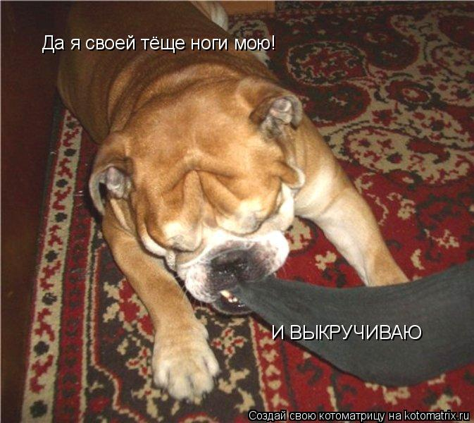 Котоматрица: Да я своей тёще ноги мою! И ВЫКРУЧИВАЮ
